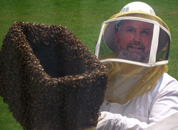 Peter Cowin with a swarm of bees.