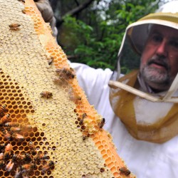 Fairmount Park bee swarm disperses as pest control responds