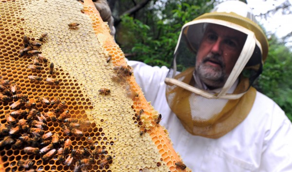 Peter Cowin checks one of his behives near his Hampden home. Cowin also removes swarms and honeybee colonies from trees or buildings.