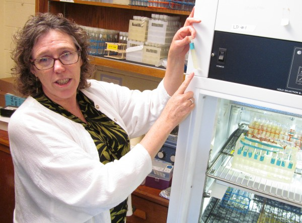 University of Southern Maine biology Prof. Lisa Moore holds a culture of prochlorococcus, the most abundant photosynthetic bacteria in the world's oceans, at her Portland lab Thursday, June 14, 2012. Moore is taking part in a $13 million National Science Foundation project to develop an evolutionary &quotTree of Life.&quot