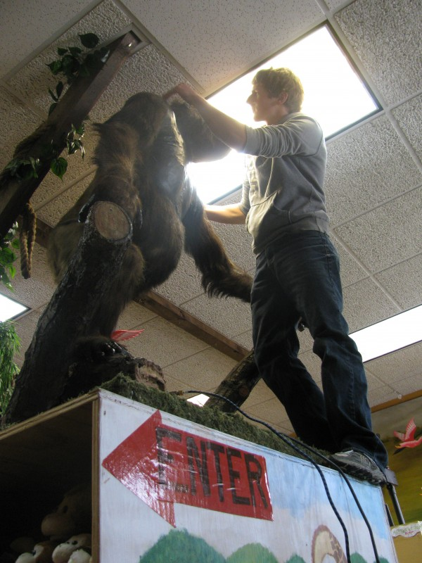 Students from Howard Whitten's Nokomis Regional High School taxidermy class returned Ape-raham to Perry's Nuthouse after refurbishing the lowland gorilla mascot this spring.