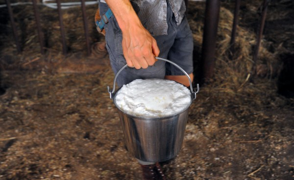 Tyler Yentes holds a bucket of fresh milk after milking one of the cows at North Branch Farm in Monroe.