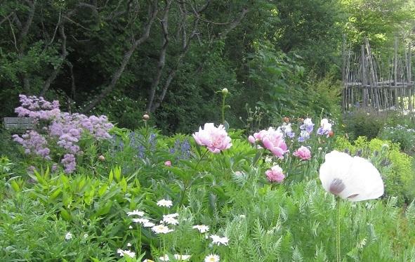 Merryspring's Perennial Garden in June