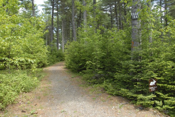 West entrance to Rabbit Trail in Bangor City Forest. This entrance connects with West Trail.