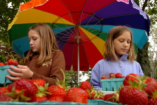 Trisha Kostusyk, 10, and her sister Fiona, 8, sell strawberries on Route 1A in Winterport in 2009. This year's harvest has been better than in recent years thanks in part to a warm spring.