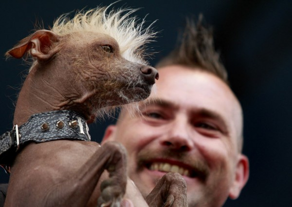 Jon Adler holds his Chinese crested dog, Icky, during the World's Ugliest Dog contest .