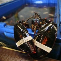 'Their seafood consumption is huge': European demand helps drive holiday sales of lobster