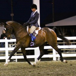 Northeast Horsemen's Conference Jan. 15-16 in Augusta