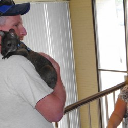 Wallaby owners hopeful rabies concerns cleared up, state will let them keep pet