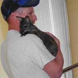State gives Aroostook couple permit to keep pet wallaby, with conditions