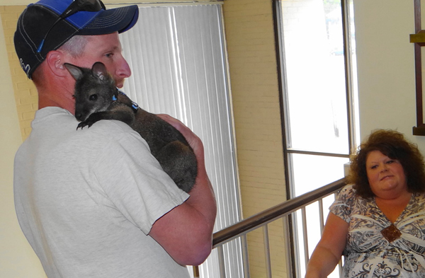 The wallaby Michelle Charette and Jay Batchelder bought as a pet cuddles on Batchelder's shoulder at the Department of Inland Fisheries and Wildlife on Wednesday.