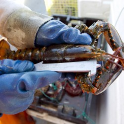 The price of lobster and the mystery of the market price