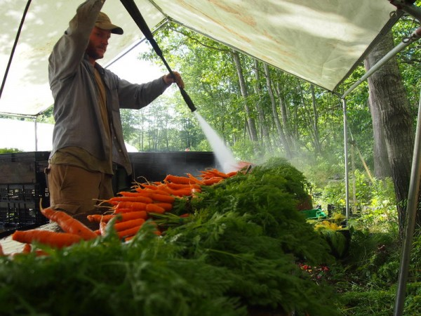 Austin Chadd, owner of Green Spark Farm in Cape Elizabeth, washes off carrots in prepartion for a farmers market, Friday, July 20. Chadd said he sells about 80 percent of his produce at farmers markets.