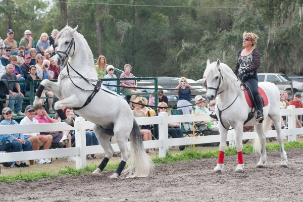 Herrmann's Lipizzan Stallions will appear July 20-22 at the Pembroke Fairgrounds, Pembroke Maine. This event will benefit First Light Farm Equine Shelter. Come and see these amazing white stallions perform.