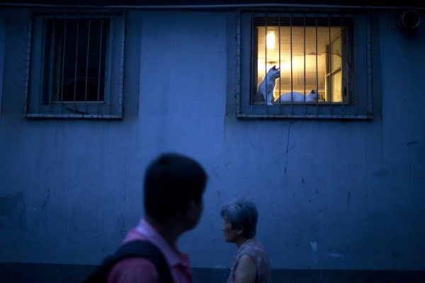 Two cats rest on a windowsill in a hutong alley in central Beijing on Sunday, July 8, 2012.