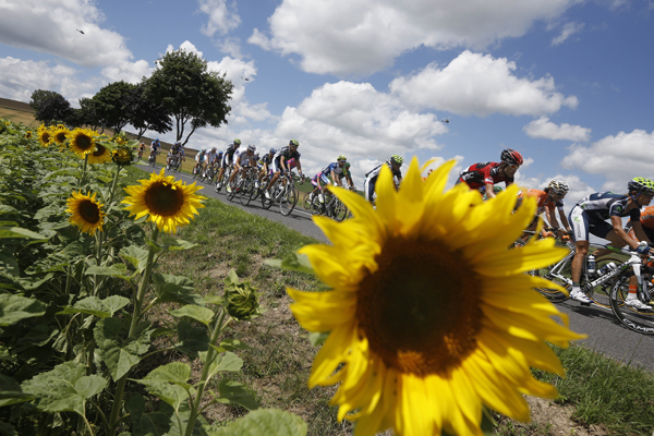 The pack passes a field of sunflowers during the seventh stage of the Tour de France cycling race over 123.6 miles with start in Tomblaine and finish in La Planche des Belles Filles, France on Saturday, July 7, 2012.