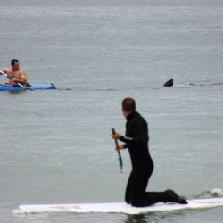 Maine surfer who survived shark attack: 'There are animals out there that can eat you'