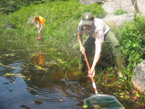 Acadia staffer Michael Marion (foreground) and Audyn Curless of Mount Desert dip nets in Witch Hole Pond in Acadia National Park on Saturday, July 14, 2012, as part of the park's 10th annual Bio Blitz.
