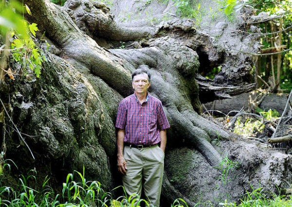 John Nutting stands next to a toppled silver maple tree that is believed to be about 390 years old. Nutting believes the tree that grew along the Androscoggin River bank in Leeds fell after the river surrounded the trunk during the heavy rain storms at the beginning of June 2012.