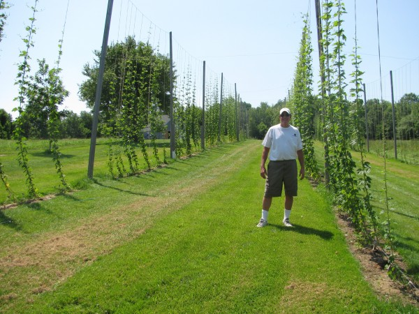 Arthur Lewis of Elm Hill Farm stands in front of the acre of land he has planted with hops. He and two adjacent farms are among the few organic hops farmers in the state.
