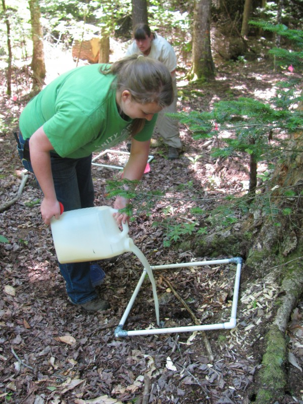 Unity College student Taylor Follette, 19, of Talmadge poured diluted hot mustard Monday over a square of forest land in Troy.
