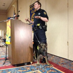 Portland police Officer Zack Finley shows off the abilities of Mako, a 15-month-old German shepherd born in Slovakia, Friday afternoon in front of members of the Rotary Club of Portland.