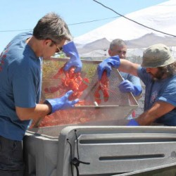 Rockland lobster festival opens Wednesday with free admission