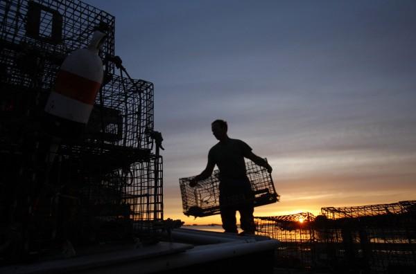 Lobsterman Bruce Steeves stacks traps at dawn in Portland in June 2009.