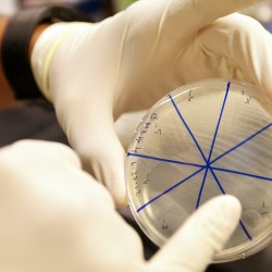 U.S. backs new genetic research on infectious diseases