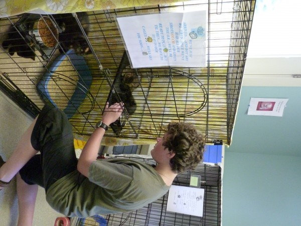Volunteer Jordan Roubinek, 14, of Rockport, Maine, pets kittens at the Pets Are Worth Saving shelter on Tuesday.