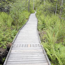 Vandals caught on camera breaking into Orono Bog Boardwalk