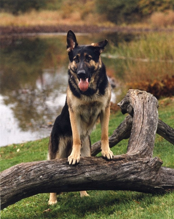 The well-loved Maine State Police K-9 Ruger recently died.