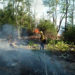 Forest service investigating Washington County arsons