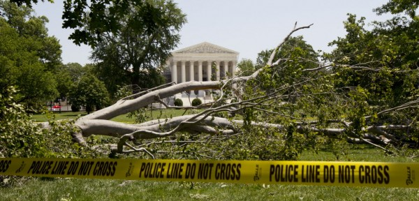 An American beech tree lies on Capitol Hill grounds in Washington, Saturday, June 30, in front of the U.S. Supreme Court.