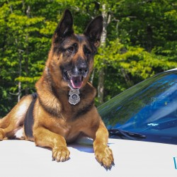 Beloved police dog dies in Ellsworth