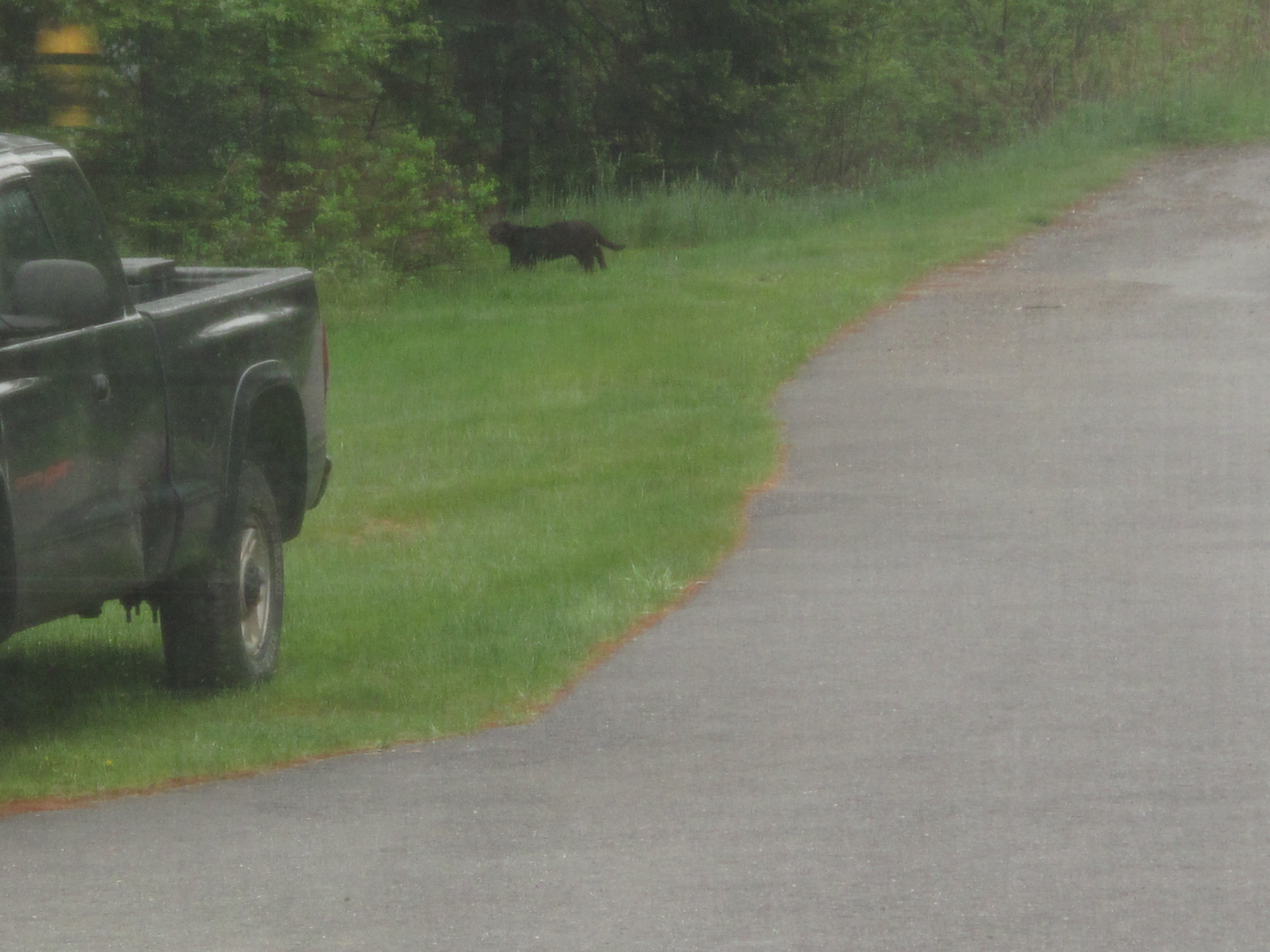 The mysterious origins of the black squirrels inhabiting Lincoln County