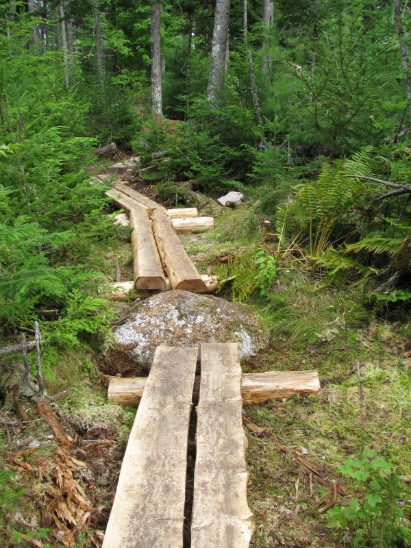 A portion of the trail built in summer 2011 at Ellsworth's Branch Lake Public Forest.