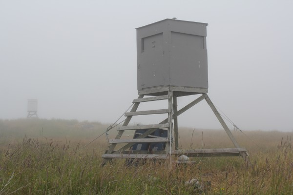 Two birder &quotblinds&quot stand abandoned in the fog on Metinic. Usually at this time of year the blinds would be surrounded with cawing terns and the grassy land would have eggs and chicks scattered all around. But the island is quiet because the terns abandoned the nesting ground after a bad storm this summer, which allowed their predators to move in quickly.