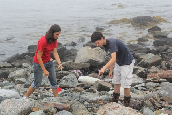 David Bridges, 20, of Augusta, and Katie Chenard, 22, of Rochester, N.Y., both work to &quotgrub&quot guillemot chicks from their rock tunnel homes on Tuesday, July 17, 2012 on Metinic Island. Half of the 300-acre island is a bird refuge where Bridges and Chenard monitor and protect seabird populations. The two are interns for U.S. Fish and Wildlife Service. The interns weight the chicks and monitor what they eat.