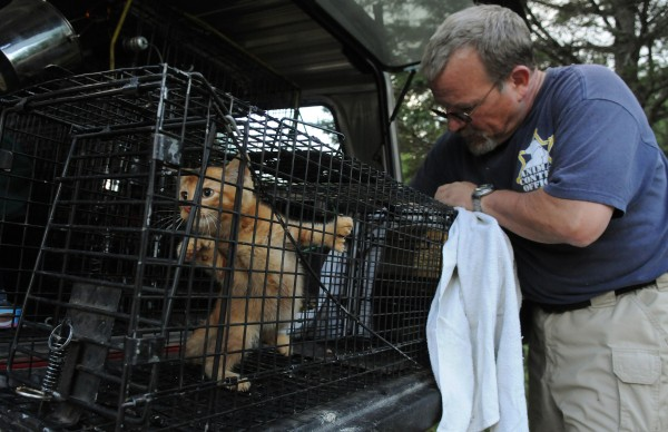 &quotOh yeah, this one can be saved,&quot said Veazie Animal Control Officer Joseph Murphy as he attempts to coax a feral kitten into a cat carrier after trapping the animal on Hobson Avenue in Veazie on Tuesday, July 10, 2012.