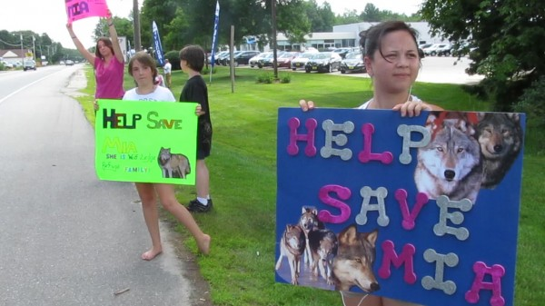 Protesters taking issue with a wolf-canine hybrid that was sequestered in Brunswick on July 6, 2012, wave signs at traffic near Cook's Corner.
