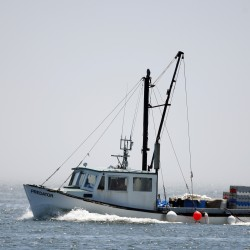 NOAA report spotlights 'underfishing'