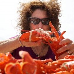 Pingree urges cruise ships calling on Portland to buy up Maine lobster to help drive up demand