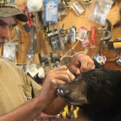 Alton taxidermist mounts the trophies