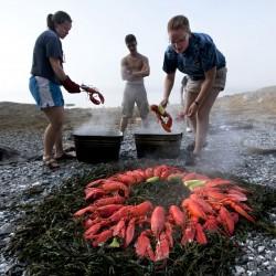 The Lobster Farming Fad
