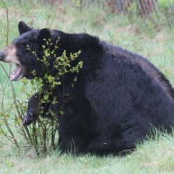 Charging bear survivor: 'It was all kind of a blur'