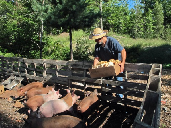 Chris Brown, a self-proclaimed &quotmodern-day gleaner,&quot throws a box of salvaged food to his two-month old piglets on Friday, Aug. 24, 2012, at Brown Family Farm in Otter Creek.