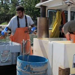 Maine lobstermen figured out how to make more money off their catches