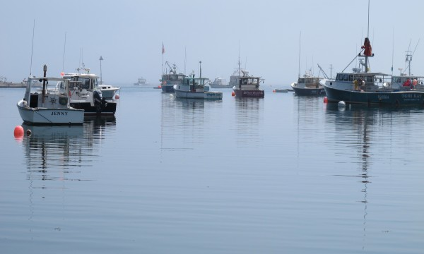 A group of lobster boats moored Monday, Aug. 13, 2012, in Winter Harbor, near the Winter Harbor Lobster Co-Op.