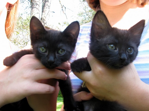 These two kittens were found Saturday tied in a burlap bag abandoned on the side of the Back Belmont Road in Belfast.